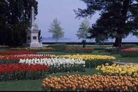 Tulips by Lake Leman