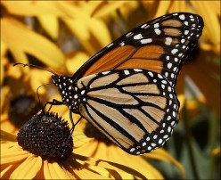The Beautiful Butterfly Park for Family Recreation