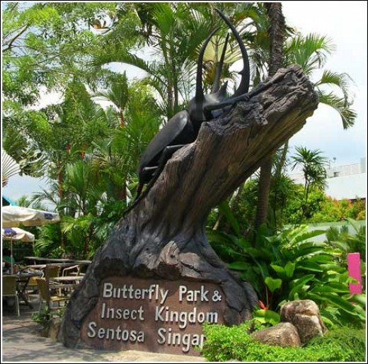 Butterfly Park and Insect Kingdom in Singapore