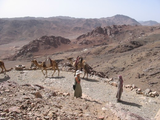 Trail up Mt. Sinai. Camel traffic is common.
