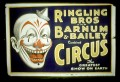 The Circus: An Animal's Life Behind the Red Curtain