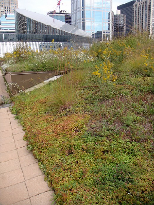 A beautiful green roof in Chicago. Photo by theregeneration.