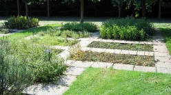 Herbs in the Landscape: Herb Lawns and Herb Foundation Plantings