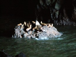 The Sea Lion Caves
