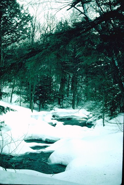 A frozen mountain stream in the woods along the trail of the Canadian Ski Marathon. .