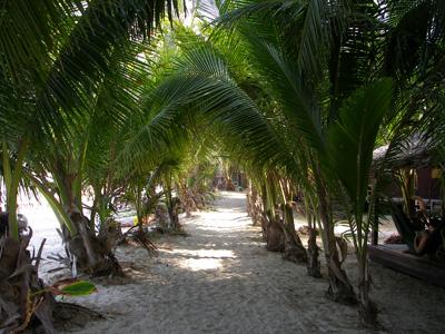 Palm corridor