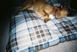 My dog Vivi
