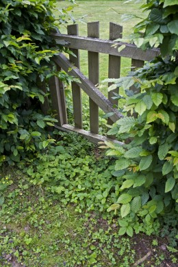Wooden Gates look beautiful and natural surrounded by the foliage of your garden.
