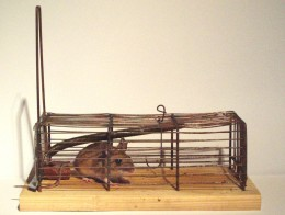 http://upload.wikimedia.org/wikipedia/commons/1/19/2005_mousetrap_cage_1.jpg