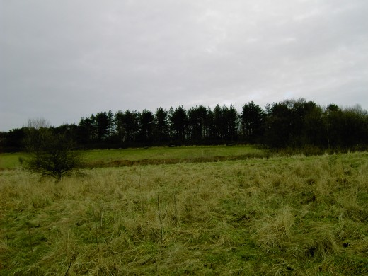 At the summit of the hill there is a linear woodland.
