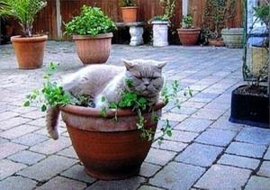 Cat on a Plant Pot (Photo from petpals.com)