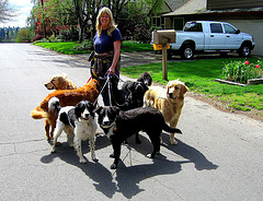 Dogs Out for a Walk (Photo from Flickr)