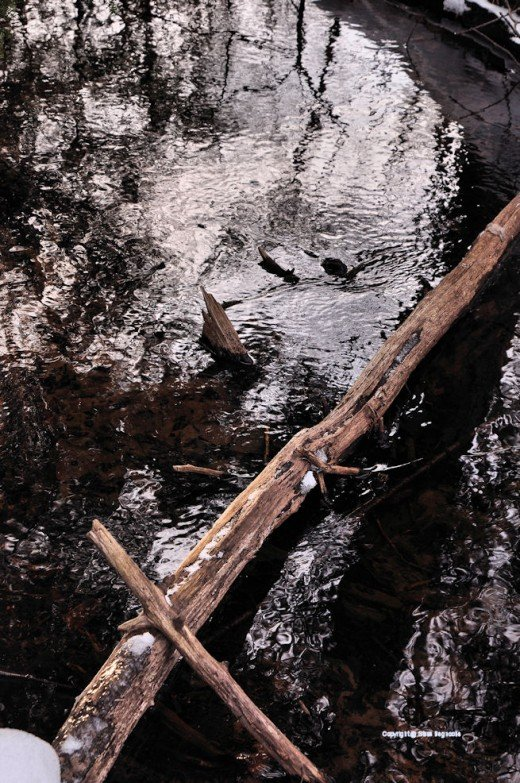 A downed tree glistens in the light reaching a dark area of the creek.