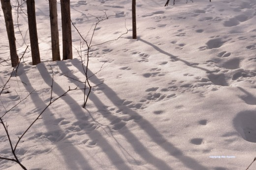 Snow is covered with tracks.