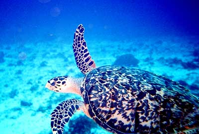 Creative Commons: http://www.rcs.k12.va.us/tech/Turtle2_sm.jpg