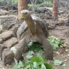 Information About The Most Endangered Tortoise And Turtle Species
