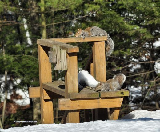 Squirrels snooze lazily in the warm sun of a calm mid-winter afternoon.