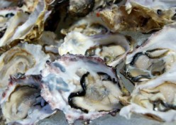 How to Improve Your Sex Life: Aphrodisiac Foods to Get You in The Loving Mood