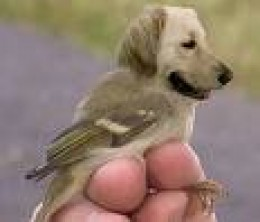 Don't be surprised if a golden goes NUTS at the sight of a bird since they were bred to retrieve them.