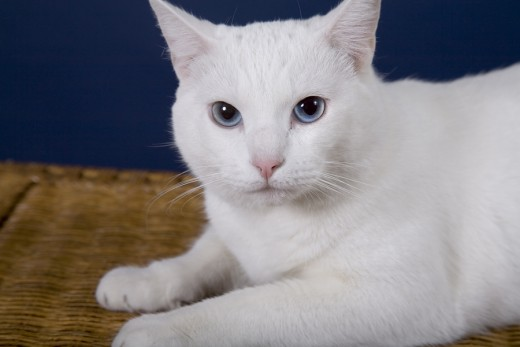 Some white cats are born deaf.