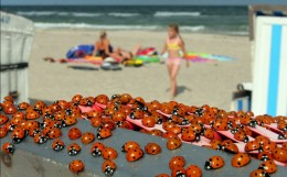 Ladybirds ar a beach in Germany