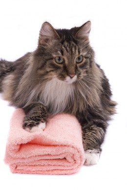 How To Bathe A Cat Without Getting Clawed