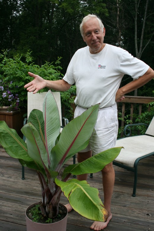 DrTom with his prized possession, a Ugandan banana plant that he grew from seed.