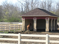 A Stable for shelter and a safe paddock is Ideal