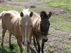 Very Best Way to Keep a Horse, the Essential list you need and Financial Stable Management