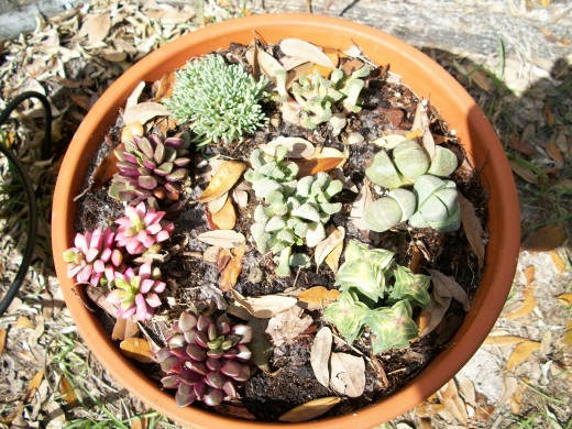 My mini desert landscape. I find succulents fascinating.