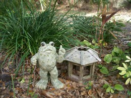The filibustering toad. I'm not usually one for garden gnomes, or swans filled with marigolds, but this guy, a gift, does have character.