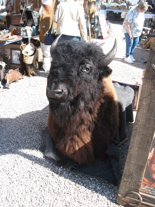 Mounted Bison (Buffalo) Head on sale at Annual Gem and Mineral Show in Tucson, AZ