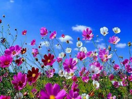 spring flower wallpaper