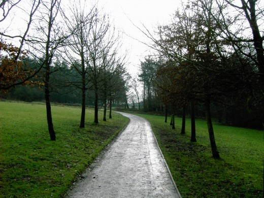 The avenue of trees takes us from the car park towards the meadows and woodlands