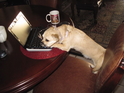 My dog falls asleep on the keyboard