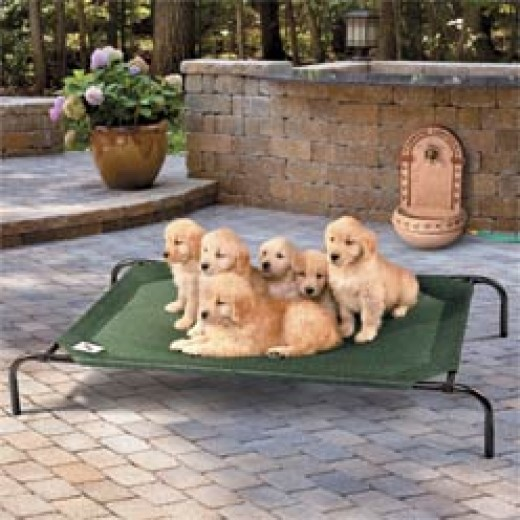 Coolaroo Off the Ground Outdoor Dog Bed