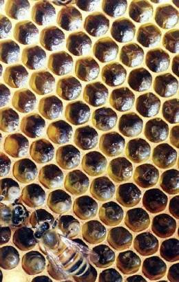 Beautiful Honey Comb