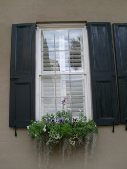 One of the charms of Charleston: blooming flowers in windowboxes during winter