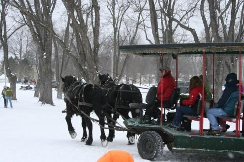 Horsedrawn Sleigh Rides