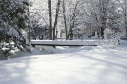 Picture of Snow Covered Bridge
