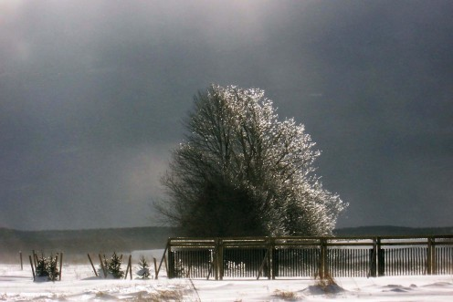 Photos of Ice Covered Tree