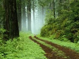 Teaching makes a road