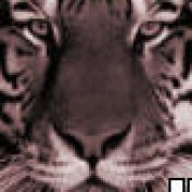 harziz profile image