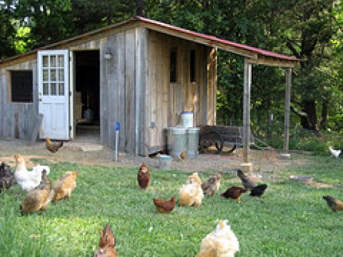 The Perfect Set up with a free range yard and excellent shelter.