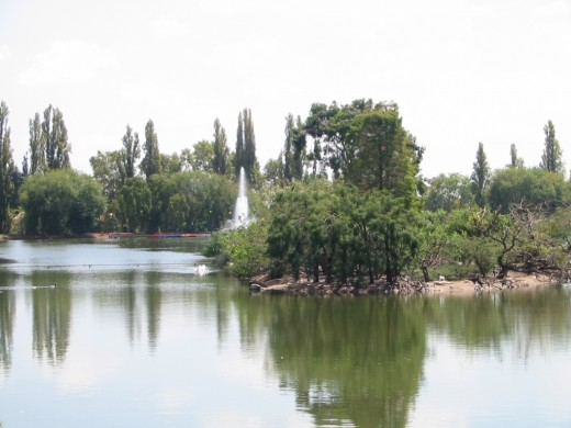 The Zoo Lake, an oasis in the Northern Suburbs