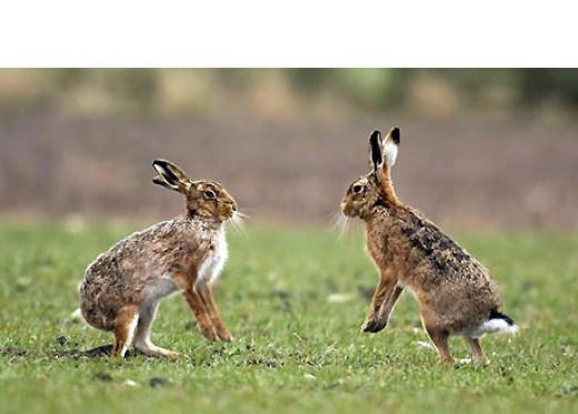 Rabbit Droppings Looked like smarties in Wales.