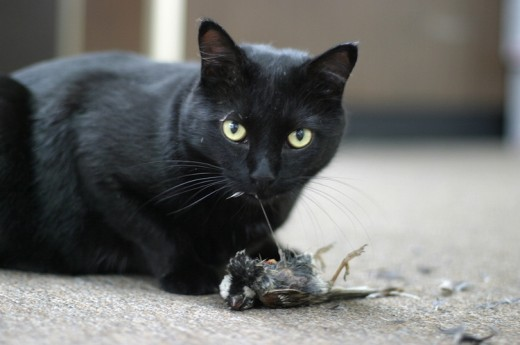 CAT EATING PREY