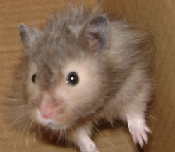 Hamsters and Their Personalities