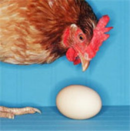 Which comes first? Chicken or egg?