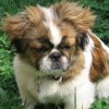 gm0nk3y profile image